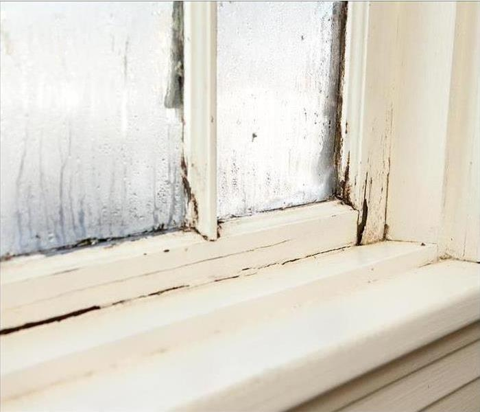 Mold Remediation When Mold Spreads in Your Home, SERVPRO Helps to Remove It